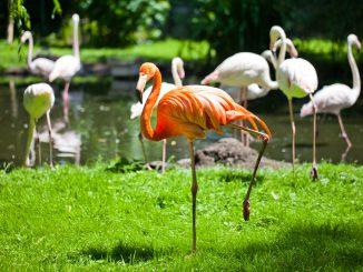 zoo wrocław dlaczego warto zobaczyć