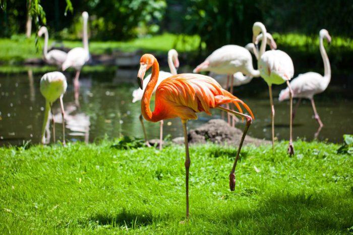 Zoo we Wrocławiu – dlaczego warto je zobaczyć?