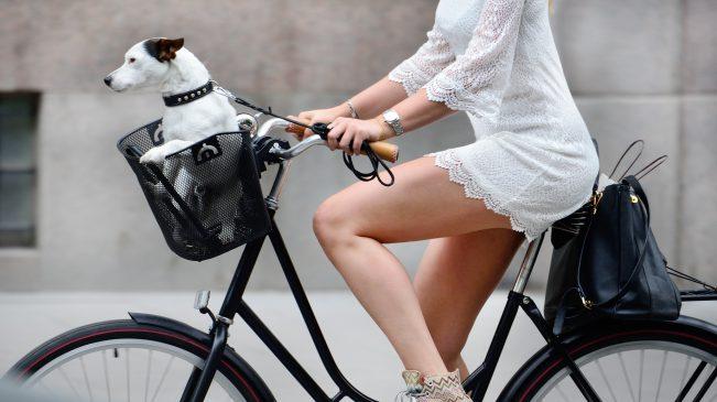 rower miejski na lato
