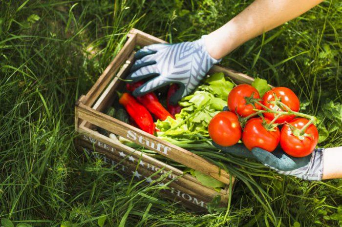 Jakie są najlepsze warzywne przekąski?
