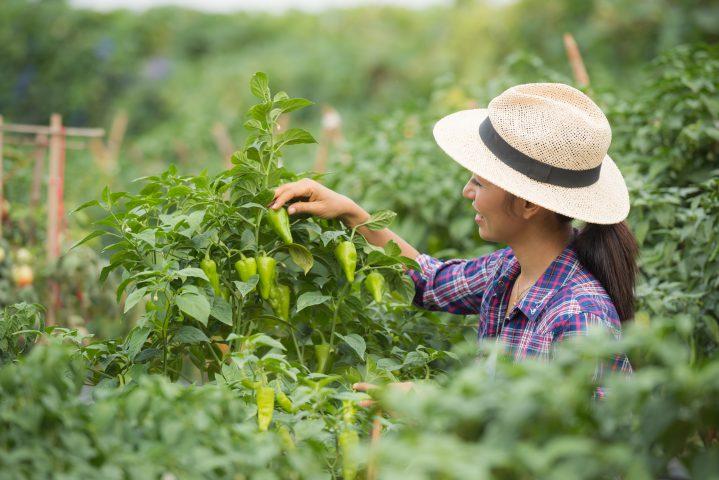 Jak urządzić ogród?  5 rad na wiosnę!
