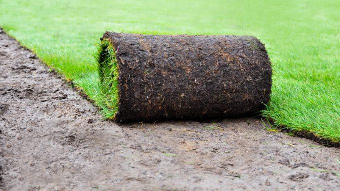 trawnik-z-rolki