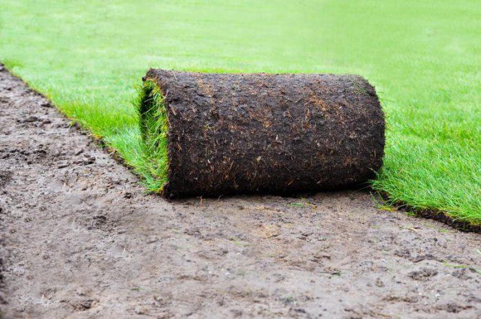 Trawnik z rolki – doskonały wybór na wiosnę