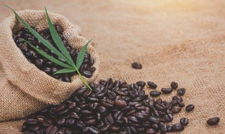 kawa i cannabis
