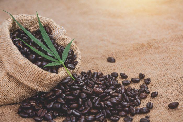 Coffee Canna, z miłością do kawy